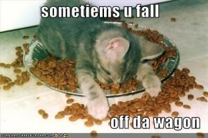 cat-falling-off-wagon